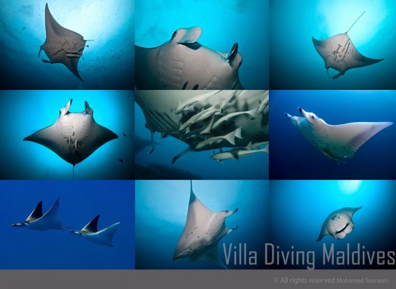 Vila Diving Sun Island Resort & Spa